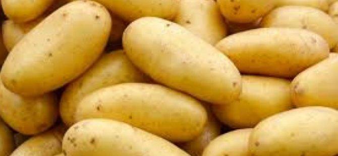 İlkbahar patates ekimi yapılan araziler, Genel Tarım Sigortası Fonu'na beyan edilmeli