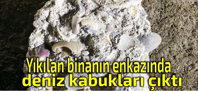 Kartal'daki enkazdan deniz kabukları çıktı!