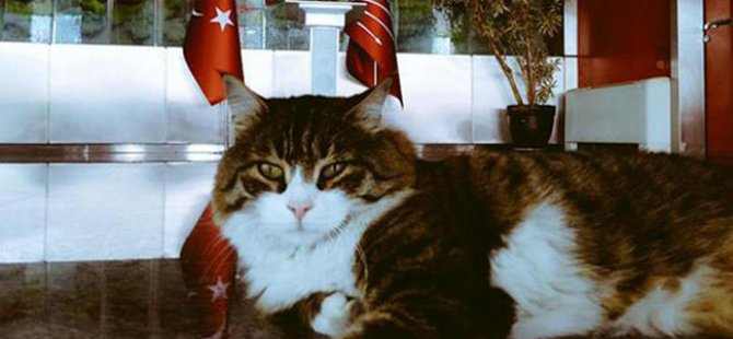 Kılıçdaroğlu CHP'nin kedisinin kediler gününü kutladı
