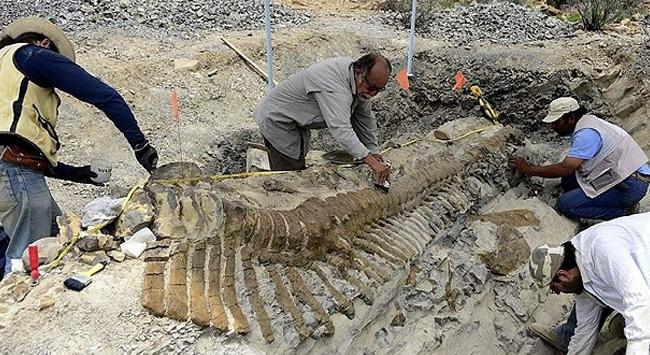 72 milyon yıllık dinozor kuyruğu bulundu