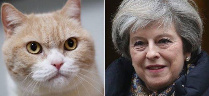 """Fransız bakan kedisinin ismini 'Brexit' koydu: """"Kapıyı açtığımda dışarı çıkmıyor"""""""