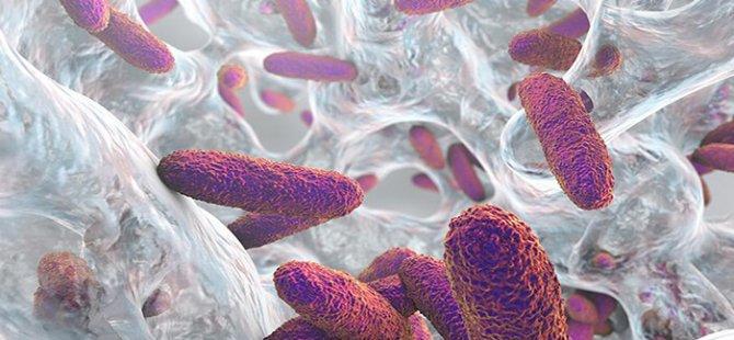 Antibiyotik direncini önlemenin yolu bu alışkanlıkta saklı