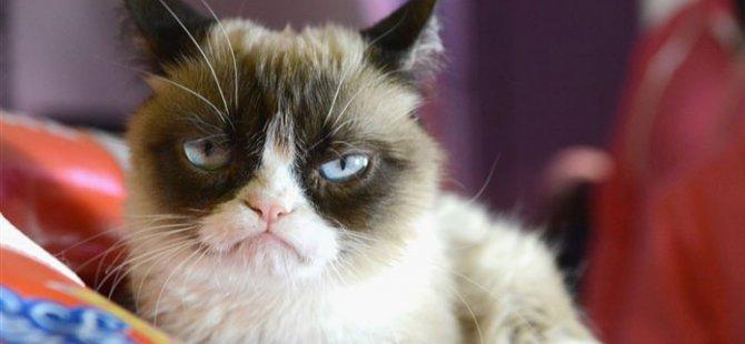 Sosyal medya fenomeni 'Grumpy Cat' hayatını kaybetti