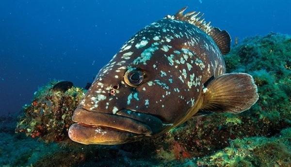 Su ürünleri yasasına aykırı hareket ve izinsiz zıpkın ile balık avlanma