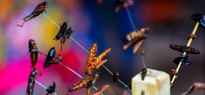 Bilim insanları böcek yemenin faydalarını anlatıyor