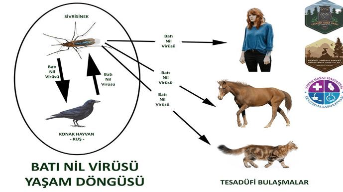 Batı Nil Virüsü ile ilgili açıklama