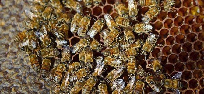 Arılarla terapi (Ağrıdan kurtulmak için kovanların üzerine uzanıyorlar)