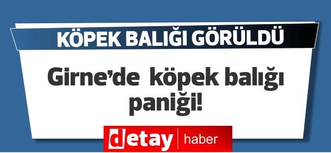 Girne'de köpek balığı paniği!