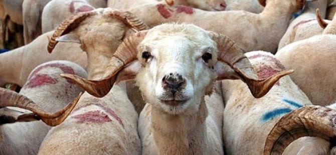 Kurban Bayramı süresince fazla miktarda et tüketilmemeli