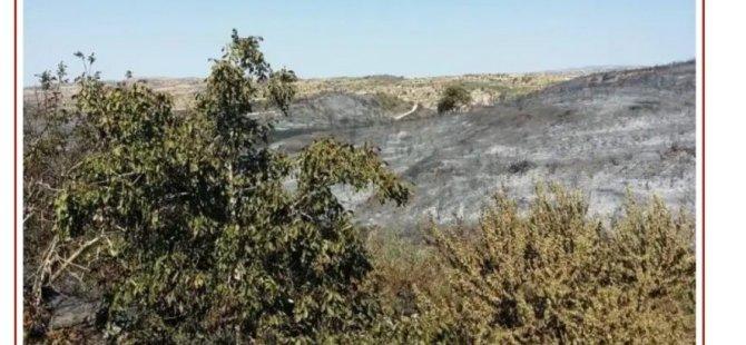 Limasol'daki yangın kontrol altına alındı