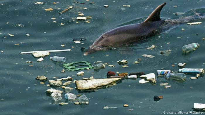 Marmara'da sayım: Yunustan çok çöp var