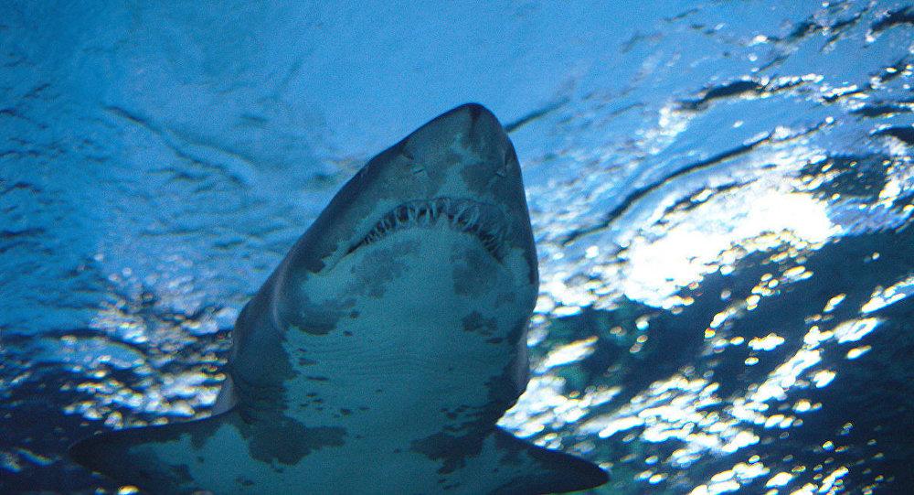 Grönland'da 512 yaşında köpekbalığı tespit edildi