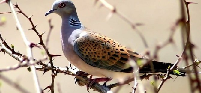 Yeşil Barış Hareketi: Doğadaki canlılar hiç kimsenin malı değildir!