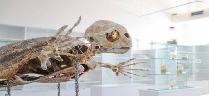 Kıbrıs  Herbaryum ve Doğa Tarihi Müzesi ile Viyana Doğa Tarihi Müzesi arasinda ortak proje çalişmalari başliyor
