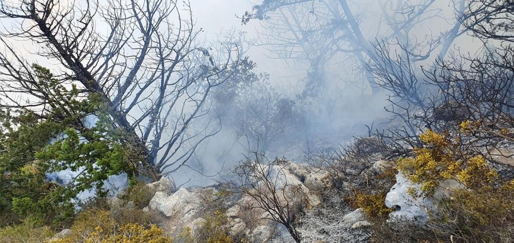 Kantara'da yangın kontrol altında (VİDEO HABER)