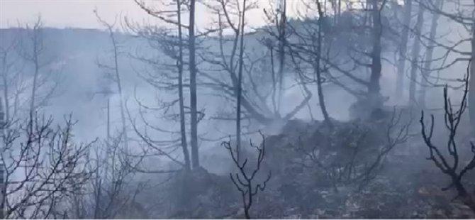 """Orman Dairesi: """"Kantara yangınıyla ilgili bazı haber ve fotoğraflar gerçekleri yansıtmıyor"""""""
