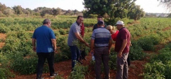Tarım Dairesi eğitim çalışmalarına Paşaköy ile devam edecek