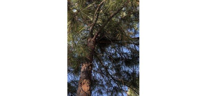 Her Daim Dostlar'dan ormanlarda kuş yuvası yerleştirme etkinliği