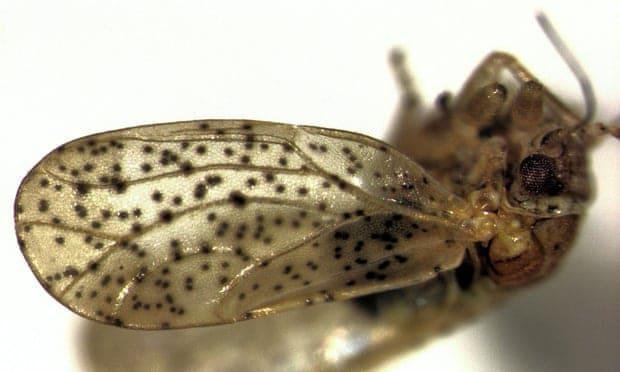 Böceklerin efendisi.. Yeni Zelanda'da keşfedilen böceğe Frodo Baggins adı verildi