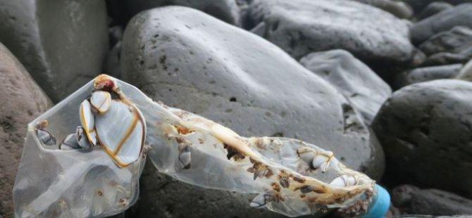 Plastik atıklar Erişilemeyen Ada'ya erişti