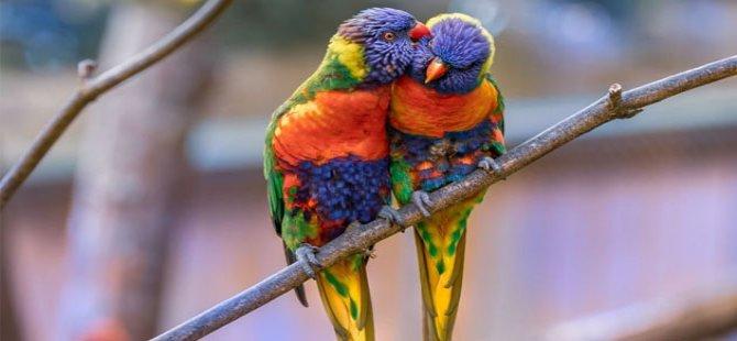 Hayvan Partisi: Kuzey üzerinden yabani kuş ticareti yapılıyor