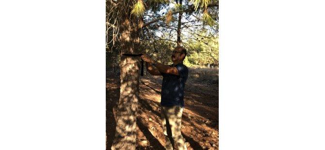 Salamis Ormanları'na kuş yuvası yerleştirme hafta sonu devam edecek