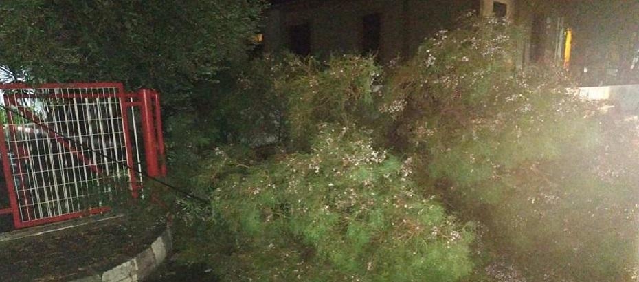 Lefkoşa'da Ledra Palace bölgesinde devrilen ağaç trafiği aksattı