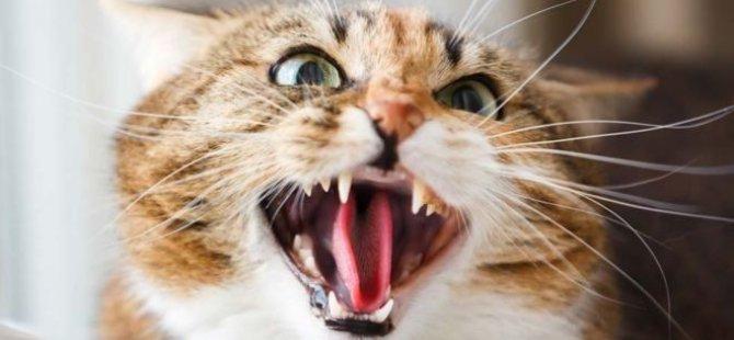 Kediyi silah olarak kullanan Rus hakkında 5 yıla kadar hapis istemiyle dava açıldı