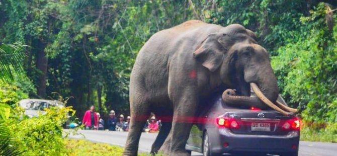 Tayland'da bir fil otomobili ezdi
