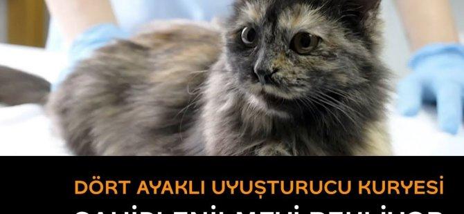 Bir hapishaneye uyuşturucu taşıyan kedi yakalandı: Kriminal geçmişini unutturacak yeni aile aranıyor