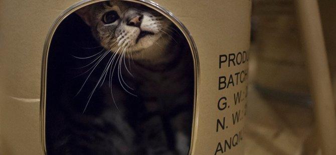 Kedisini 'şişko olduğu için' uçağın kabinine almak istemediler
