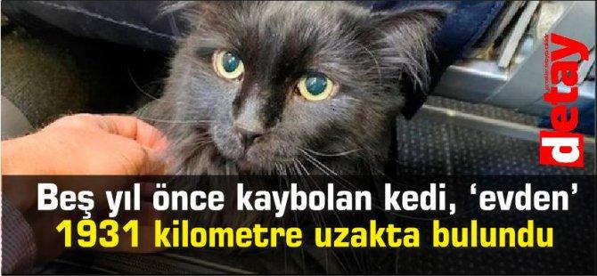 Beş yıl önce kaybolan kedi, 'evden' 1931 kilometre uzakta bulundu