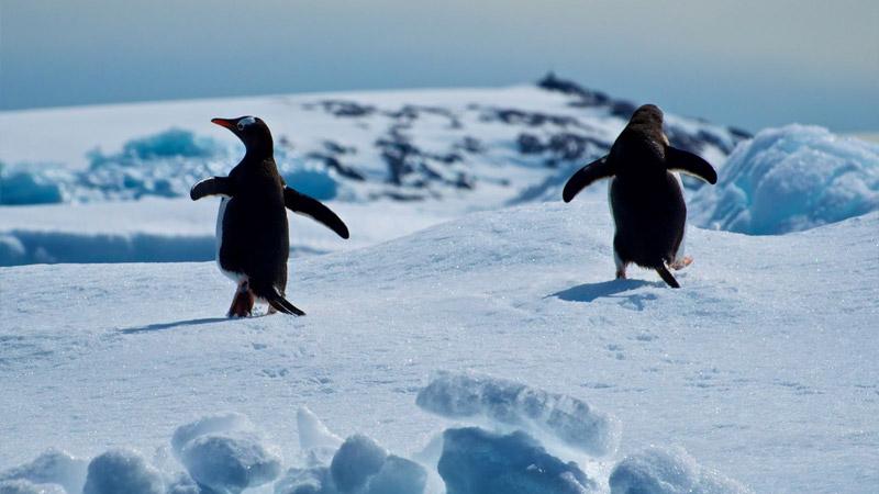 Aylarca Antarktika'da görev yapan bilim insanlarının beyni 'monotonluktan' küçüldü