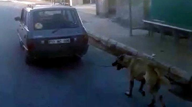 Vicdansızlık! Köpeği tampona bağlayıp…