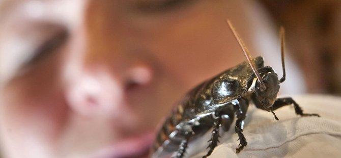 Rus veteriner hekimler hamam böceğini ameliyat etti