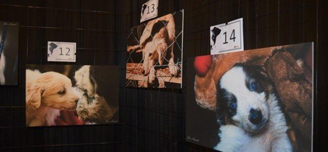 LTB Hayvan Barınağı yararına sergi düzenlendi