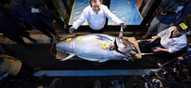 Japonya'da 1.8 milyon dolara ton balığı satıldı