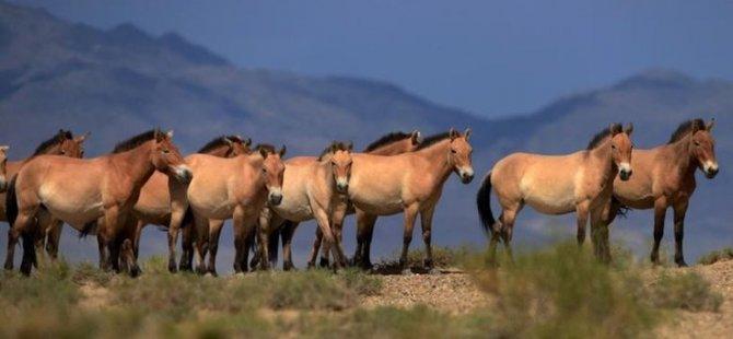 Avustralya'daki katliama atlar da dahil edildi
