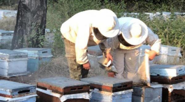 Arıcıların, doğrudan gelir desteği için kayıtlarını 15 Ekim'e kadar yaptırmaları gerekiyor