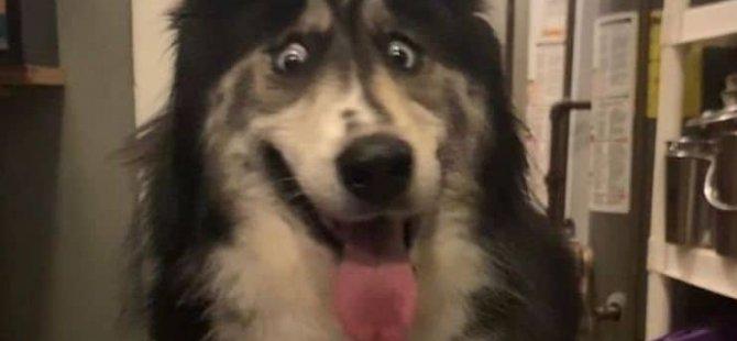 'Gözleri tuhaf' diye barınağa bırakılan köpeği sahiplenmek için 150 kişi başvurdu