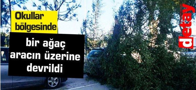 Okullar bölgesinde bir ağaç aracın üstüne devrildi