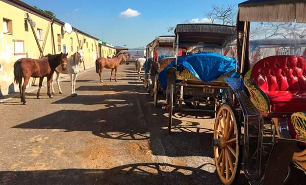 İBB Adalar'daki at ve faytonları satın almaya başladı