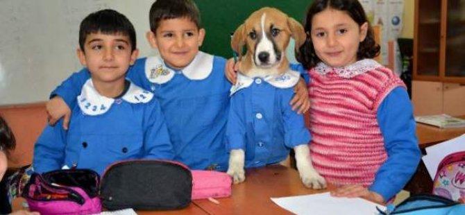 Tokat'ta ilkokul öğrencilerinin sahiplendiği köpek 'Fındık' sosyal medyanın gündeminde