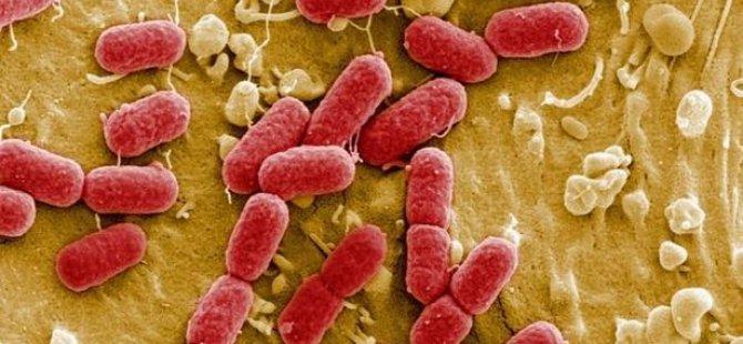 Yapay zeka başarısı: En tehlikeli bakterileri öldüren antibiyotik bulundu