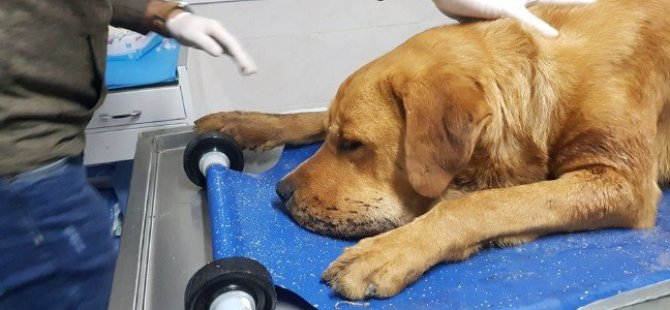 Yangında bayılan köpek kalp masajıyla kurtarıldı