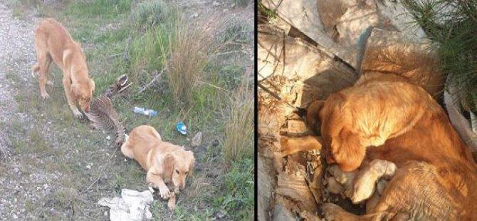 Dikmen Çöplüğünde Terk Edilmiş 30 Köpek Kurtarıldı