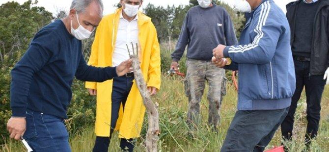 Tarım Bakanı Oğuz, Yabani Zeytinlerle İlgili Yürütülen Pilot Çalışmayı İnceledi