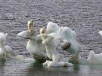 Kuzey Buz Denizi'nde 2050'ye Kadar Yaz Mevsiminde Buzullar Yok Olabilir
