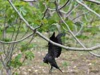 Kargaları vurup ağaçlara astı