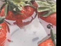 Tuzlu suya #çilek atınca ortaya çıkan böcekler (video)